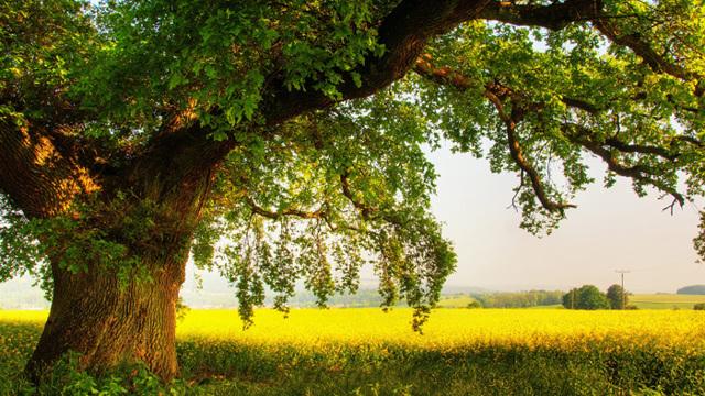 Посадить дерево в честь рождения ребенка в Москве.